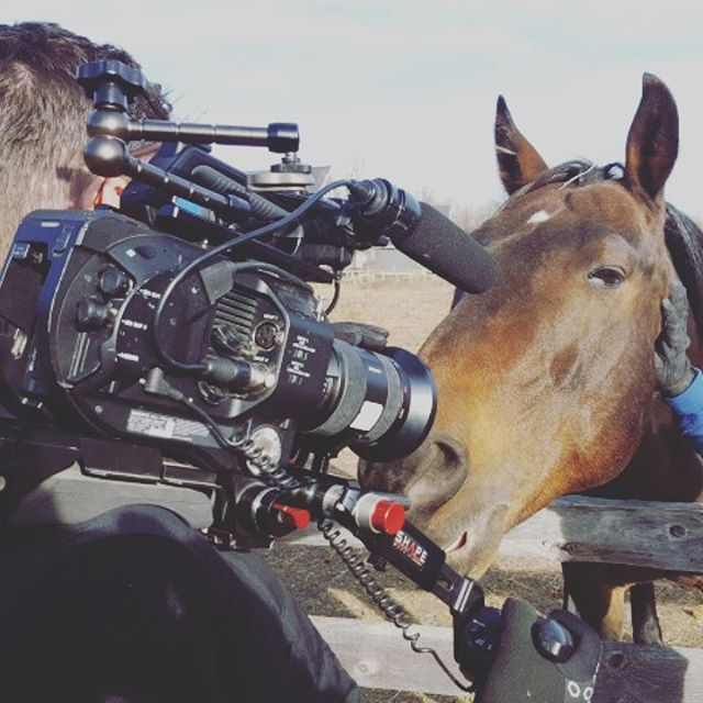Just horsing around today. . . #videography #videoproduction #horse #bts #interview #francis #longface #horsejokes #urbanstable